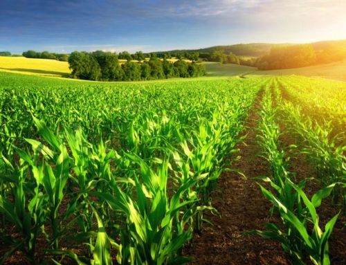 Humic acid: How does it benefit  your soil?