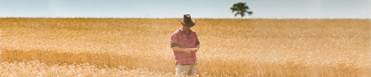Kemgro Crop Solutions image of farmer standing in wheat field for about us page.